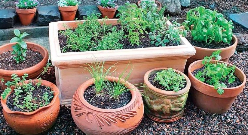 A MUST HAVE TOOL FOR GARDENING PURPOSES
